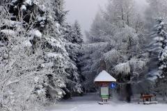 Granica lasu i Magurskiego Parku Narodowego