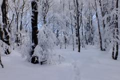 Lasy Wierchu nad Tysowym.