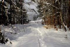 Szlak na Przełęcz Cigielka.