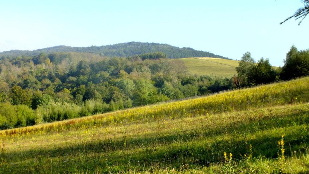 Widok na Łysą Górę z zejścia z Grzywackiej.