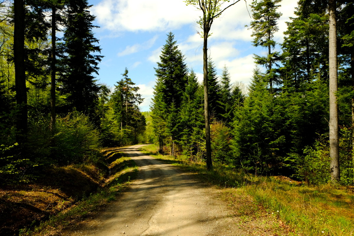 Leśna droga na Pogórzu Strzyżowskim.