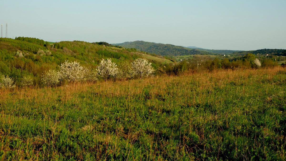 Pogórze Dynowskie - pasmo Jazowej (daleko na horyzoncie Królewska Góra). Widok z Chytrówki.