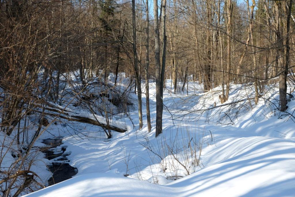 Potok Świerzówka i droga przez nieistniejącą, mocno zarastającą wieś.