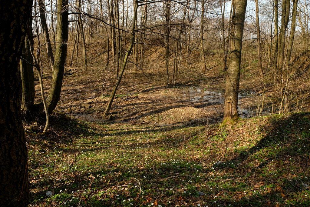 Miejsce, gdzie znajdował się mały zbiornik wodny, jednak z biegiem czasu w sposób naturalny uległ wypłyceniu i zarósł lasem.