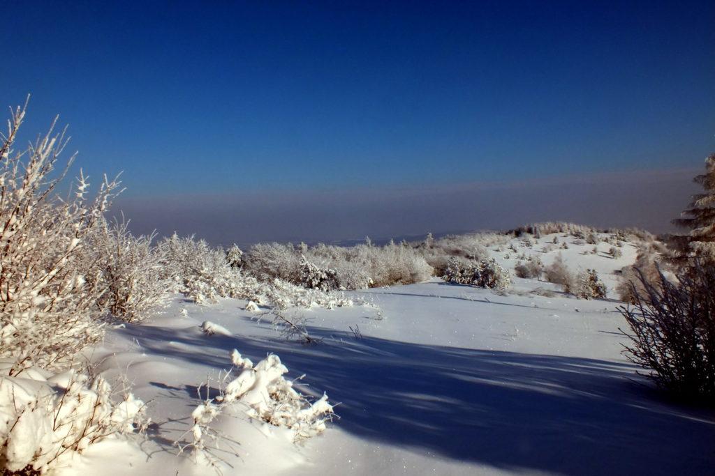 Polana podszczytowa Łysej Góry.