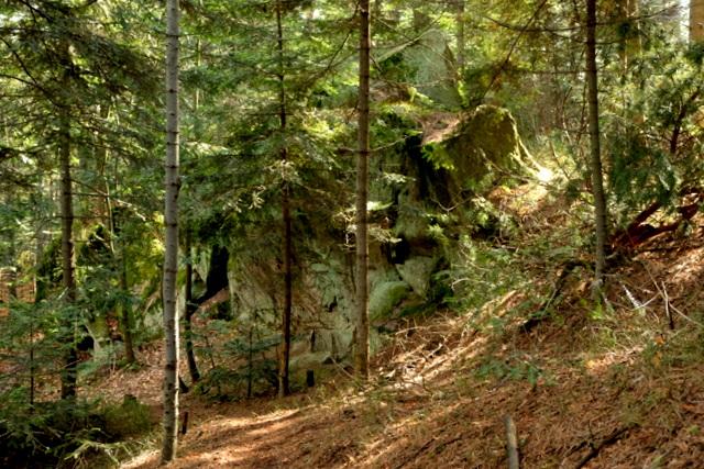 Skały w lesie zwane Zaginione Skałki.