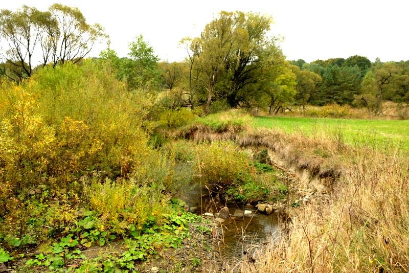 Zakole małej rzeki