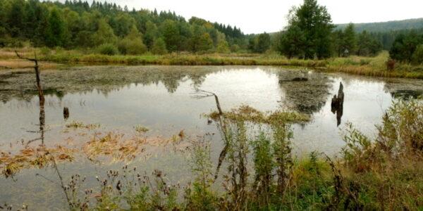 zbiornik wodny w Jasielu.