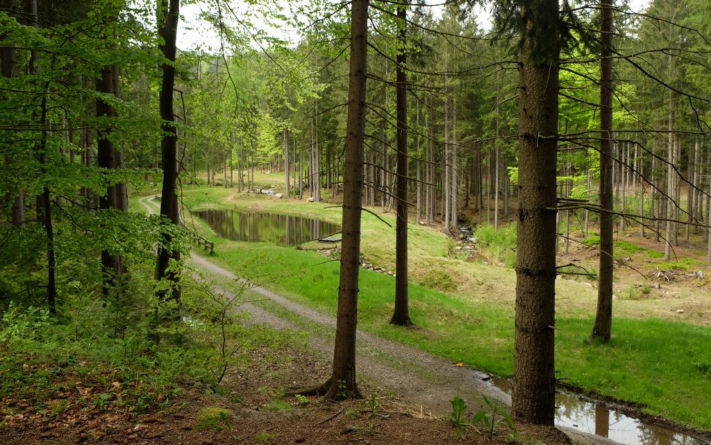 staw w lesie.